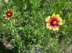 camper-flowers